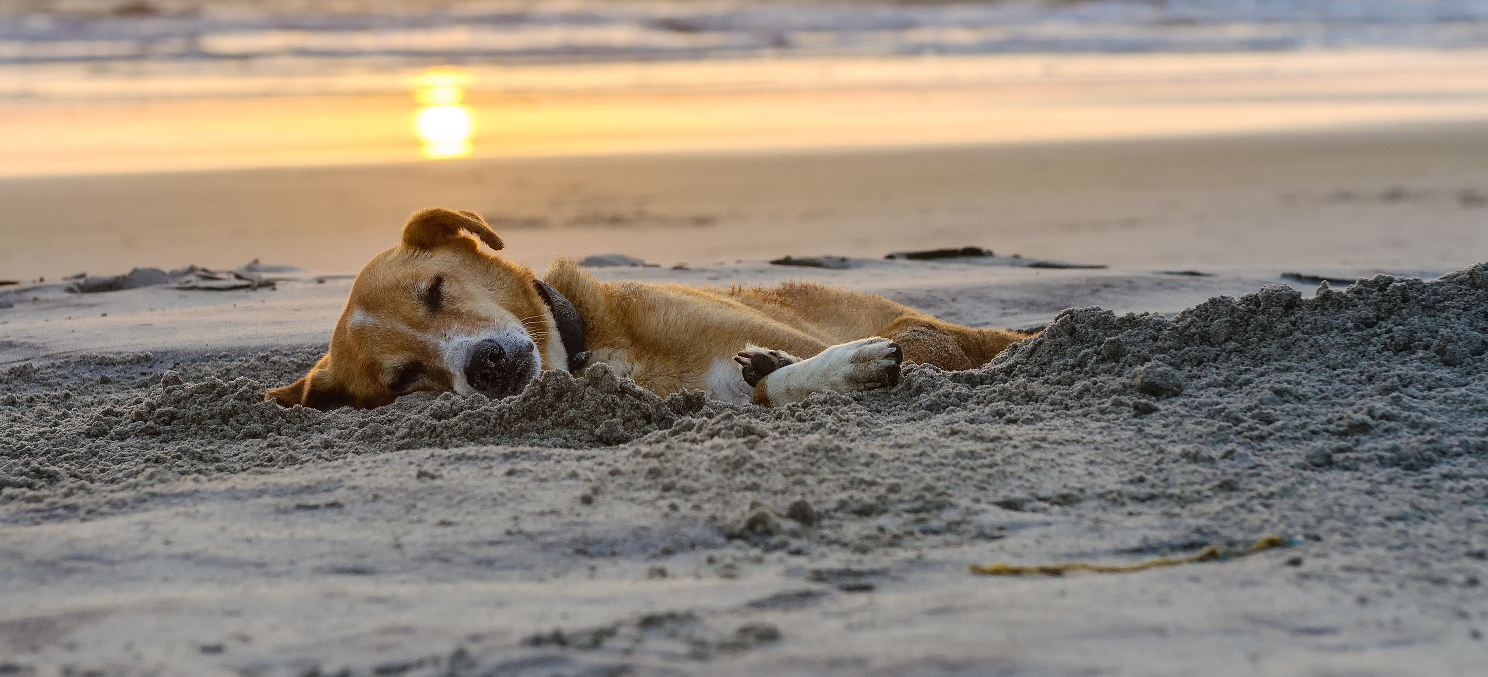 Pet Friendly Homes Beach Houses In Galveston Ryson Vacation Rentals